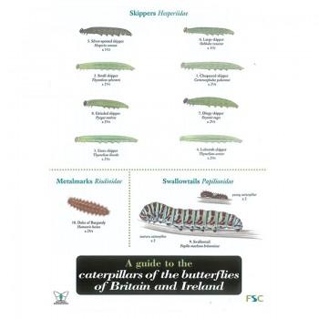 Caterpillar Field Guide