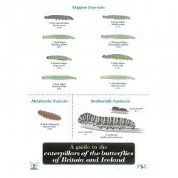 Field Guide – Caterpillars