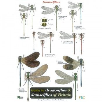 Dragionflies and Damselflies Field Guide