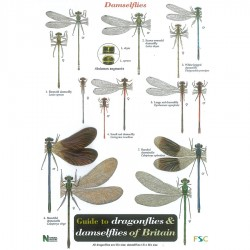 Field Guide – Dragonflies