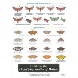Field Guide – Day Flying Moths