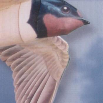 Flying Swallow Model