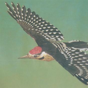 Flying Woodpecker Model