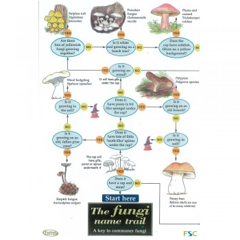 Fungi Field Guide