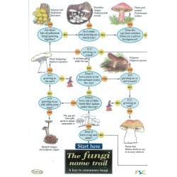 Field Guide – The Fungi Name Trail