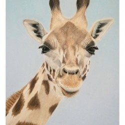 Giraffe – Pastel Drawing