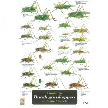 Grasshoppers Field Guide