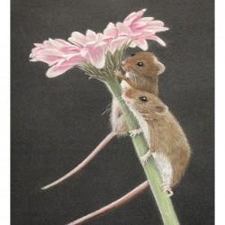 Harvest Mice Pastel Drawing