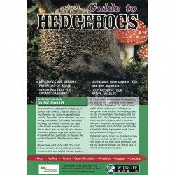 Field Guide – Guide To Hedgehogs