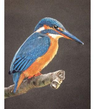 Kingfisher Pastel Drawing