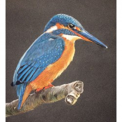 Kingfisher Pastel Drawing