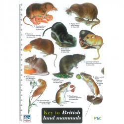Field Guide – British Mammals