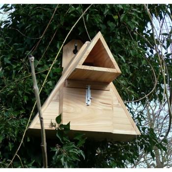 Little Owl Box