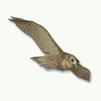 Little Owl Model