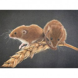 Harvest Mice On Corn Pastel Drawing