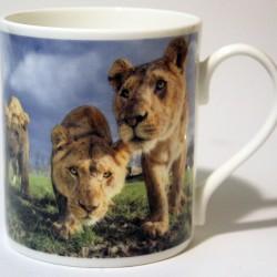 China Mug – Lion Cubs