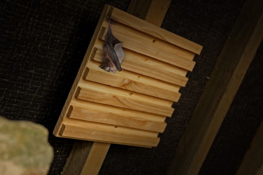 Bat Rack Hanging Station