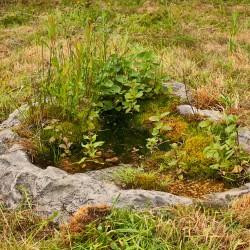 Simon King Wildlife Pond