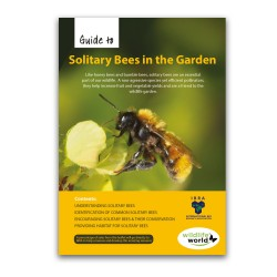 Field Guide to Solitary Bees