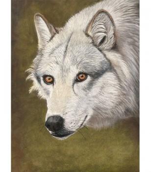 Wolf pastel drawing