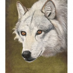 Wolf – Pastel Drawing