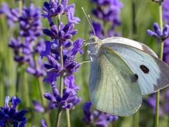 Wildlife-friendly Gardening Tips For the Summer