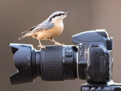 How to photograph birds in your garden