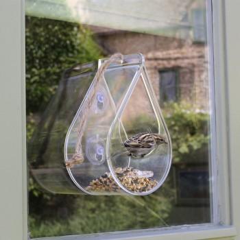 bird on window feeder dew drop