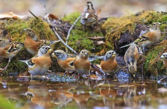 10 Tips to Help Wildlife this Winter